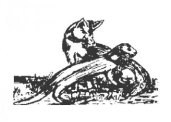 Otterskooi